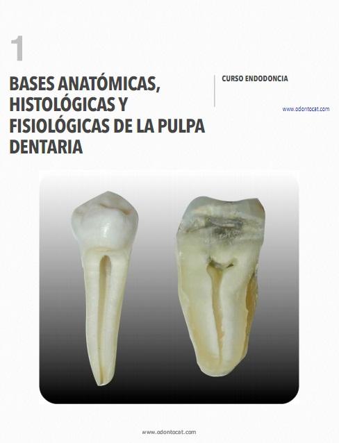 Odontocat: Curso Online de Endodoncia